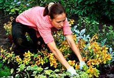 jardin-en-otono