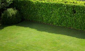 Mantenimiento de jardinería Madrid. Jardineros Madrid